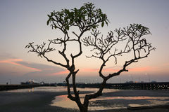 Silhouette tree with twilight sky at the seaside ferry pier Stock Photos