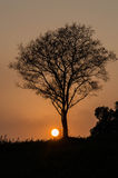 Silhouette of tree Royalty Free Stock Photo