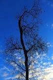 Silhouette of Tree under blue sky. The silhouette of one tree under blue sky at Mission Trails regional park, San Diego, California Stock Photos