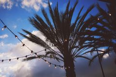 Silhouette of Tree Under Gray Clouds and White Sky during Daytime Royalty Free Stock Photos