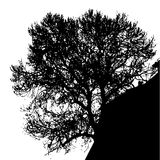 Silhouette of tree Stock Images