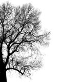 Silhouette of tree Royalty Free Stock Photos