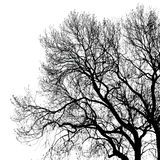 Silhouette of tree Stock Image
