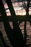 Silhouette tree by the water at sunset. Stock Photos