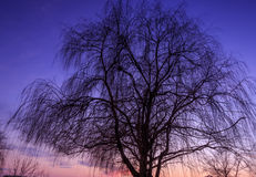Silhouette of tree Stock Photography