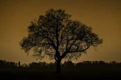 Silhouette of a tree Stock Image