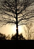 silhouette treen Royaltyfri Fotografi