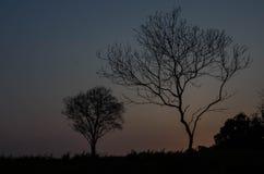 silhouette treen Arkivfoto