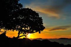 Silhouette treen och solnedgången Arkivbild