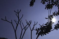 Silhouette of Trees Stock Images