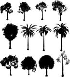 Silhouette trees Stock Photo