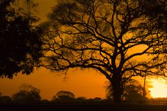 Trees at sunset royalty free stock images