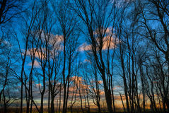 Silhouette of trees against a blue sky in the evening Stock Image
