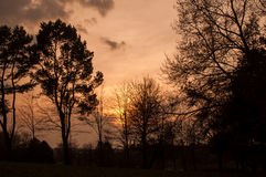 Silhouette trees against a magical  sunset. Landscape silhouette trees against a magical  sunset Stock Photo