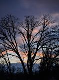 Silhouette Trees Against Sunset Sky. Vertical orientation bare trees against a colorful sunset Stock Image
