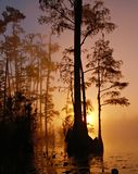 Silhouette of Trees Beside Body of Water during Sunset Stock Photos