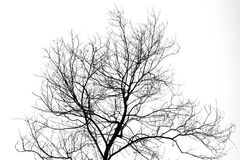 Silhouette Of Trees Branches Stock Photography