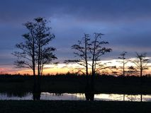 Cypress trees at sunset in the swamp royalty free stock photography