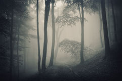Silhouette of trees in a forest with fog. Silhouette of trees in a dark forest with fog Royalty Free Stock Image