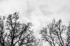 Silhouette trees on grey sky Stock Photos