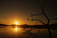 Silhouette of trees and king fisher. stock photos