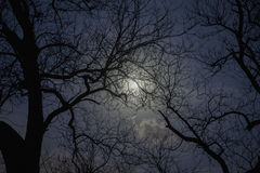 Silhouette of trees in the moonlight. Royalty Free Stock Photography
