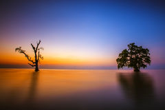 Silhouette trees in the morning scene. Sunrise at the ocean with couple of trees in silhouette Royalty Free Stock Images