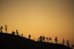 Silhouette trees on the mountain at sunrise Java ,Indonesia. Stock Photo