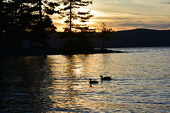Silhouette of trees, mountains, and ducks on a lake Royalty Free Stock Photo
