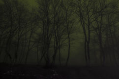 Silhouette of trees at night, Spooky foggy forest. Scary horror concept Stock Image