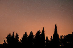 Silhouette trees Stock Image