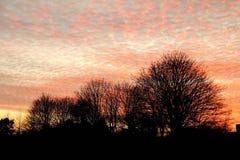 Silhouette of trees with orange sky Stock Image