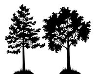 Silhouette Trees Pine and Maple. Set of Silhouette Forest Trees, Pine and Maple, Black Pictogram Elements Isolated on White Background for your Design. Vector royalty free illustration