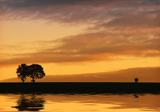Silhouette of trees and Reflections on the water. Royalty Free Stock Images
