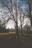 Silhouette of trees. Silhouette shot of bare trees, sun is hidden behind the trees Royalty Free Stock Images