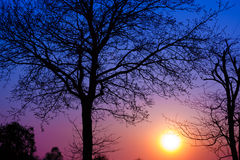 Silhouette of trees at sunset royalty free stock images