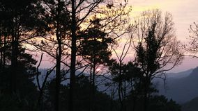 Silhouette of trees in the sunset Stock Image