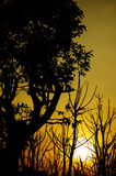 Silhouette trees with sunset. Silhouette trees and branches with sunset in golden hour stock photo