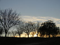 Silhouette of trees at sunset. With wispy clouds Stock Photo