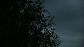 Silhouette of trees swaying. Against the dark stormy sky stock video