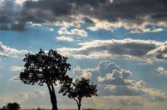 Silhouette Of Trees Under Cloudy Skies Royalty Free Stock Photos