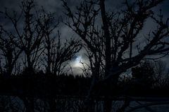 Silhouette of trees in winter Royalty Free Stock Photography