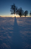 Silhouette of trees in winter sunset Stock Images