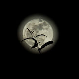 Silhouette of treetop on full moon. royalty free stock images