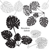 Silhouette tropical monstera leaves. Black isolated on white background. Royalty Free Stock Photography
