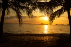 Silhouette tropical palm tree with sunset on the beach.  Stock Photo