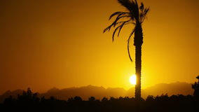 Silhouette of Tropical Palm Tree at Sunset, Time Lapse. One long silhouette of palm trees on a background of red and orange sunset sky and the outlines of the stock video