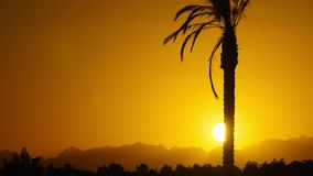Silhouette of Tropical Palm Tree at Sunset, Time Lapse stock video footage