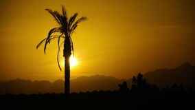 Silhouette of Tropical Palm Tree at Sunset, Time Lapse. One long silhouette of palm trees on a background of red and orange sunset sky and the outlines of the stock video footage