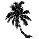 Silhouette tropical palm trees on a blank background Royalty Free Stock Images